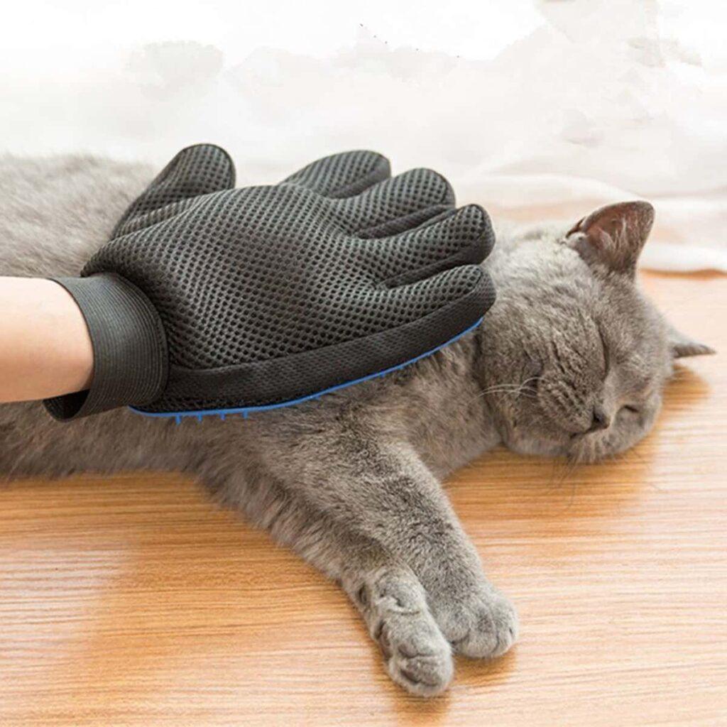 Kedi tüy dökümü engelleme